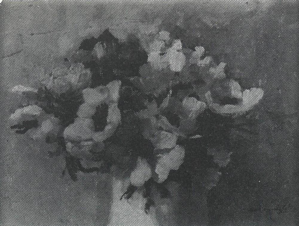 Anemonen (ca. 1920-1925) door Lucie van Dam van Isselt