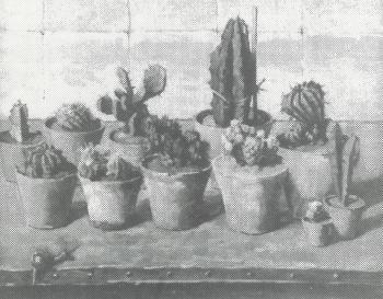 Cactussen (ca. 1920-1925) door Lucie van Dam van Isselt